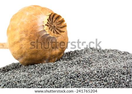 Dry poppy head lies on grains closeup shot - stock photo