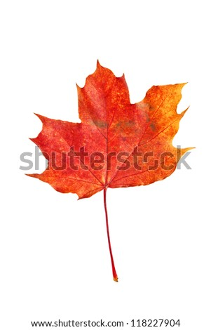 dry red autumn leaf isolated on a white background