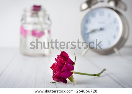 Dry red rose flower with a large vintage clock at the background. Short depth of field, vignetted. Conceptual image representing passing time and old age or death - stock photo