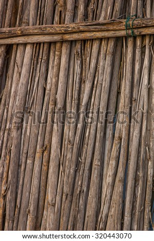 Dry reed - stock photo