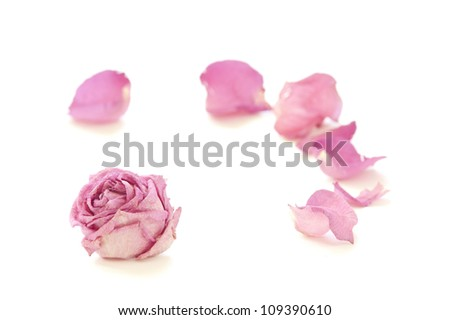 Dry rose on white background - stock photo