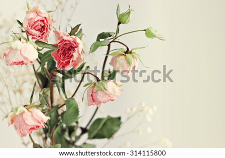 Dry roses flowers card very soft dreamy focus - stock photo