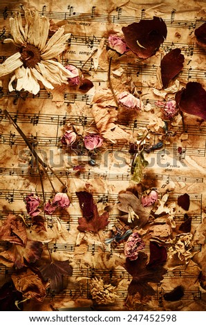 Dry roses on vintage paper background - stock photo