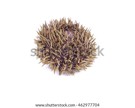 dry sea urchin on white background