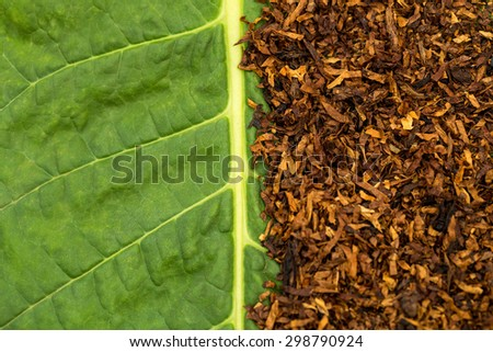 Dry smoking tobacco on green tobacco  leaf background, macro, close up - stock photo