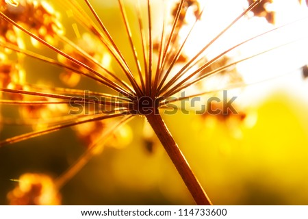 Dry stems of wild autumn flowers in sunshine - stock photo