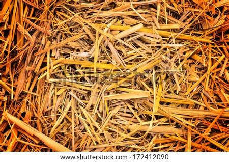Dry straw macro shot - stock photo