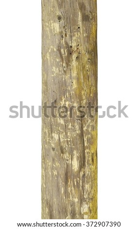 dry telegraph pole isolated on white background - stock photo