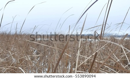 dry the grass marsh winter reed nature beautiful landscape