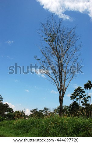 Dry tree against the blue sky - stock photo