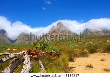 Dry tree - and amazing mountains in snow white cloud as a background. Shot in Hottentots Holland Mountains, Vergelegen area, near Somerset West, Western Cape, South Africa. - stock photo