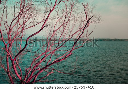 Dry tree at lake, Abstract landscape - stock photo