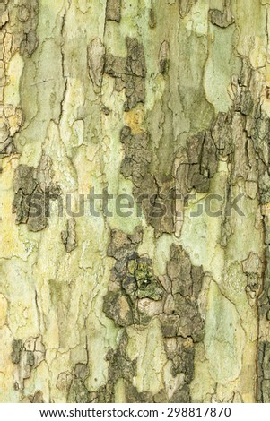 Dry tree bark texture closeup - stock photo