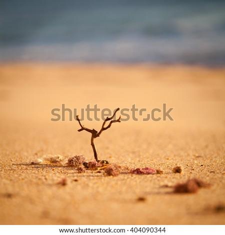 dry tree beach sand  - stock photo