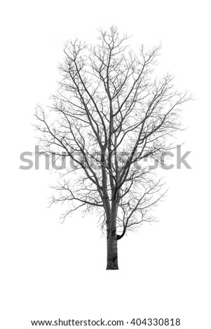 Dry tree black and white concept