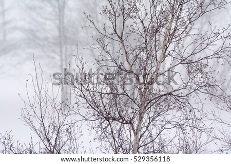 Dry tree branches in the snow view winter