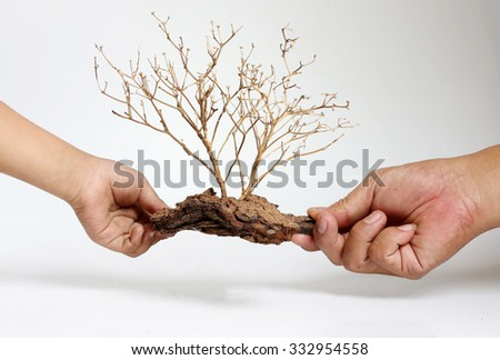Dry tree carcasses in white hands on the background.