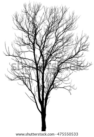 Dry tree, dead tree with beautiful branch silhouette on white background.with clipping path.