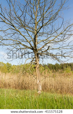 dry tree in a field - stock photo