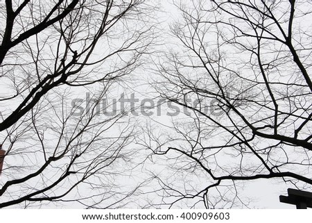 Dry tree in black and white color for background