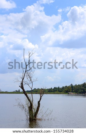 Dry tree in the lake