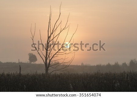 Dry tree in the swamp and sunrise. Ivanovo region.