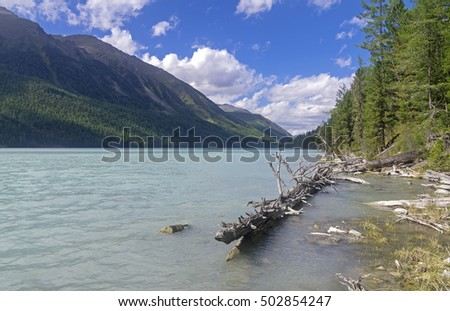 Dry tree in the water near the shore. Kucherla lake. Altai Mountains, Russia. Sunny summer day.