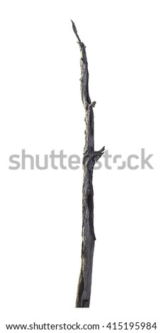 Dry tree isolated on white