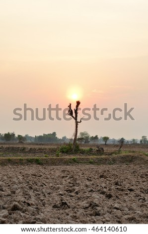 dry tree on dry land at sunset, golden hour wallpaper