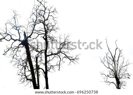 Dry tree on white background