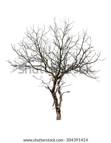 Dry tree shape isolate - stock photo