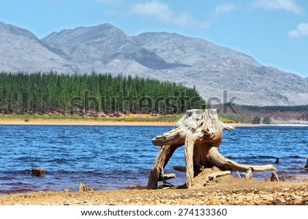 Dry tree stub on mountain lake. Shot on Steenbras Dam, near Strand/Cape Town, Western Cape, South Africa. - stock photo