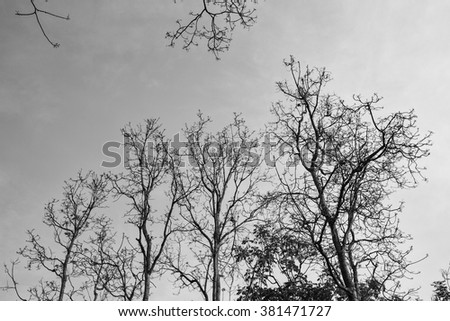 Dry trees on a hill