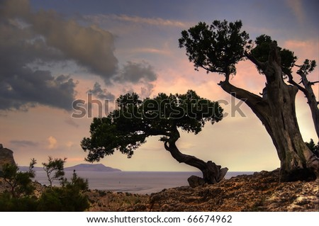 dry trees on promontory of mountain