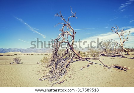 Dry trees on sand dunes, nature background, Death Valley desert, USA. - stock photo