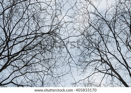 dry Twigs in the sky