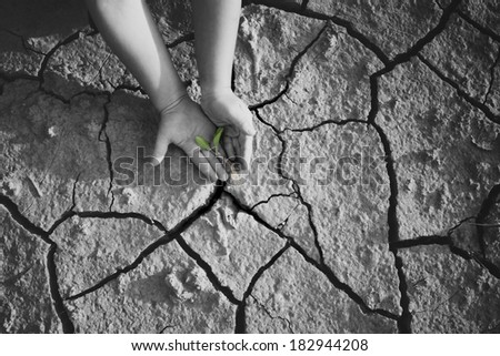 Dry weather. A small hands of child  on the  background cracked ground. - stock photo