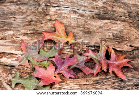 Dry weathered tree with fading autumn leaves. Horizontal layout. - stock photo