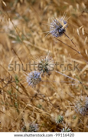 Dry weeds on blurred background - stock photo
