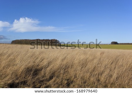 dry winter grasses and deciduous woodlands in a yorkshire wolds landscape under blue sky