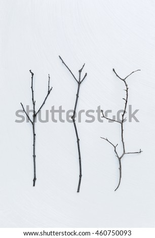 Dry wood stick on white texture background
