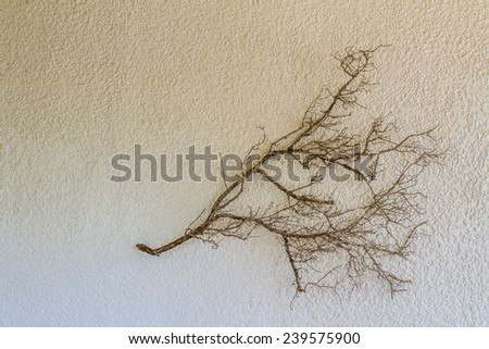 dry wooden stick on white stone wall background, abstract natural background - stock photo