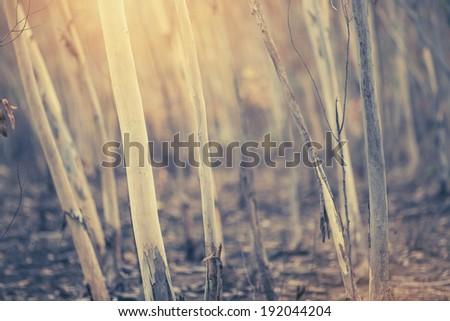 Dry wooden tree forrest - stock photo