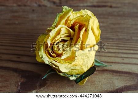 Dry yelloy closeup roses on wood background - stock photo