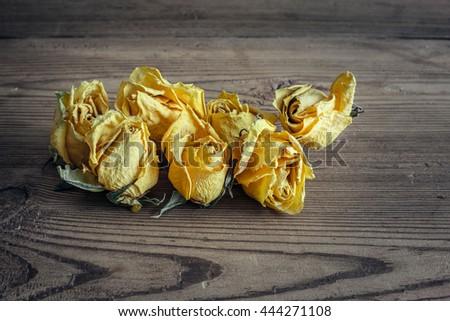 Dry yelloy roses on wood background - stock photo