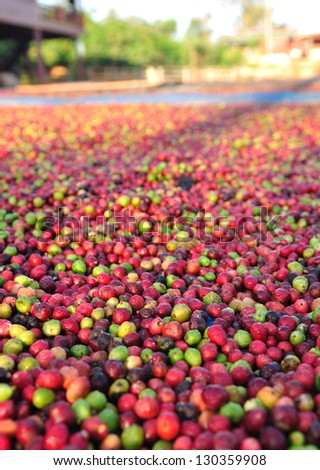 drying coffee berries in the sun. - stock photo
