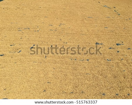 Drying of paddy