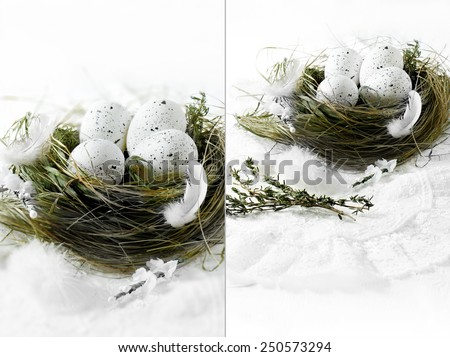 Dual image of white speckled eggs in a grass bird's nest against a white background. Concept image for Spring or Easter. Copy space. - stock photo