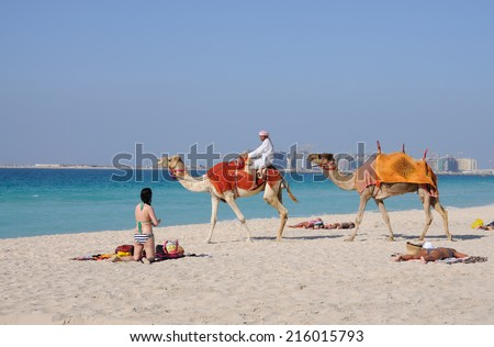 DUBAI, UAE - FEB 25: Bedouin with camels on the beach in Jumeirah Beach Residence. February 25, 2009 in Dubai, United Arab Emirates