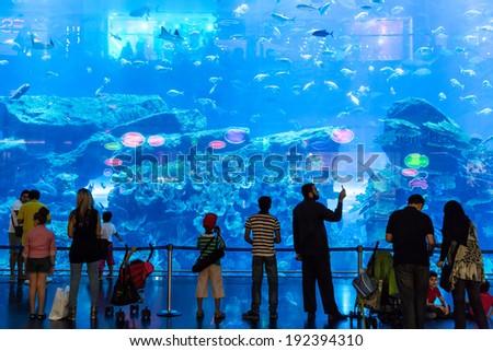 DUBAI, UAE - NOVEMBER 14: Aquarium in Dubai Mall - world's largest shopping mall , Downtown Burj Dubai November 14, 2012 in Dubai, United Arab Emirates - stock photo